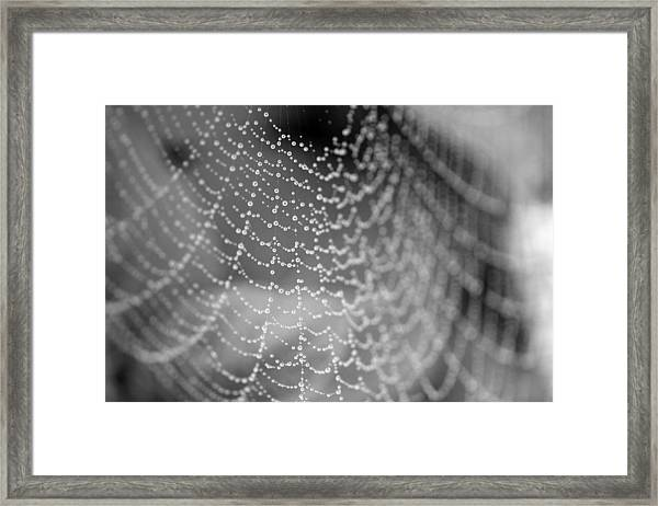 Web In The Rain Framed Print