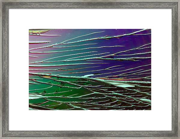 Webs Of Green And Purple Framed Print