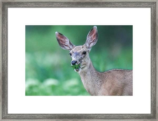 Weed Deer Framed Print