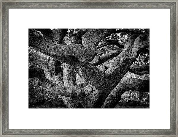 Framed Print featuring the photograph Weeping Hemlock by Steve Stanger