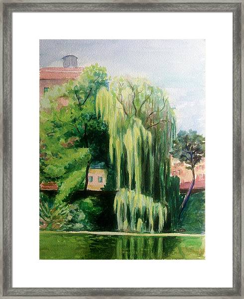 Weeping Willow At North Pond Framed Print