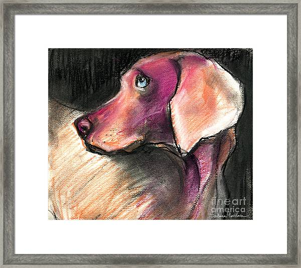 Weimaraner Dog Painting Framed Print