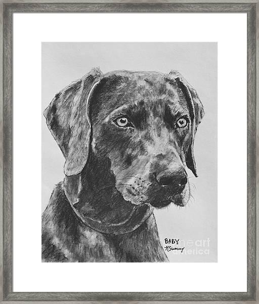 Weimaraner Drawn In Charcoal Framed Print