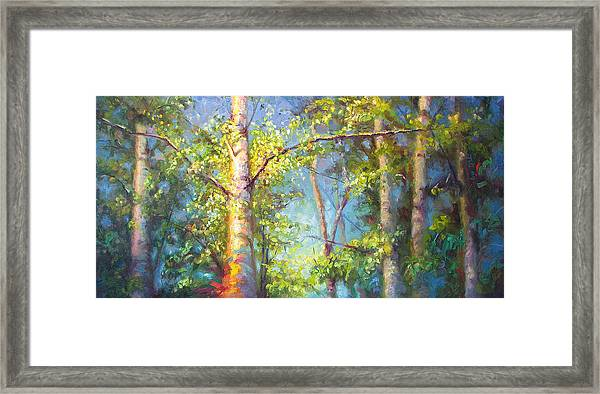 Welcome Home - Birch And Aspen Trees Framed Print