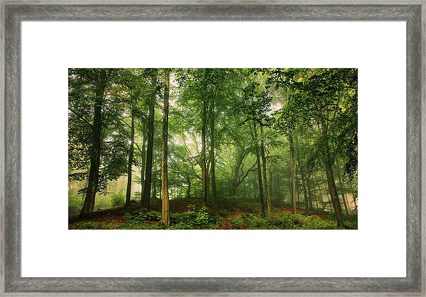 Welcome In The Forest. Framed Print