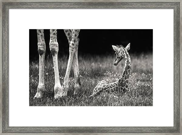 Well Protected Framed Print
