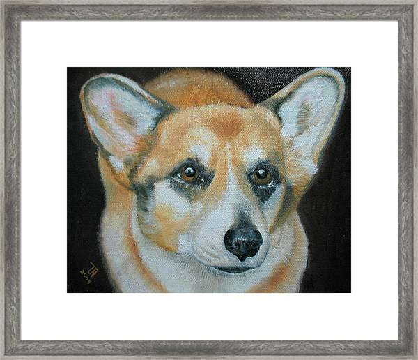 Welsh Corgi Framed Print