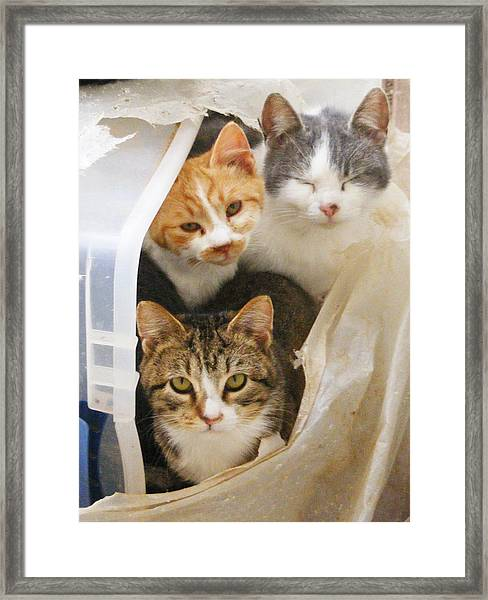 We're Watching You Framed Print