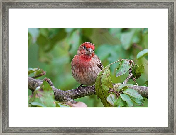 Were You Talking To Me Framed Print