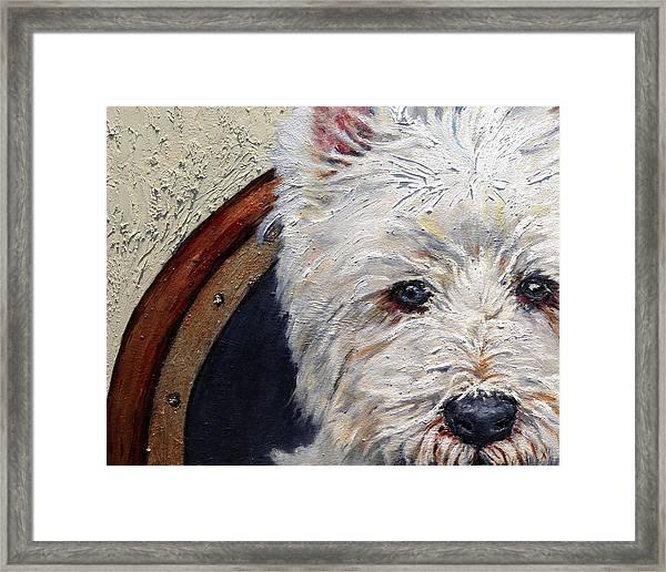 West Highland Terrier Dog Portrait Framed Print