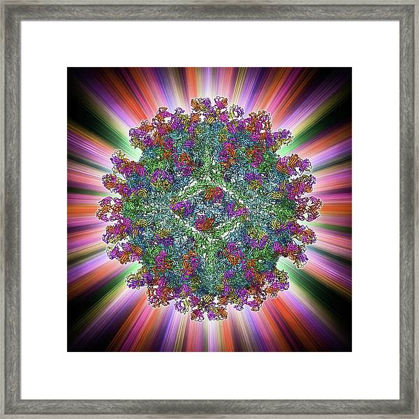 West Nile Virus And Antibodies Framed Print by Laguna Design