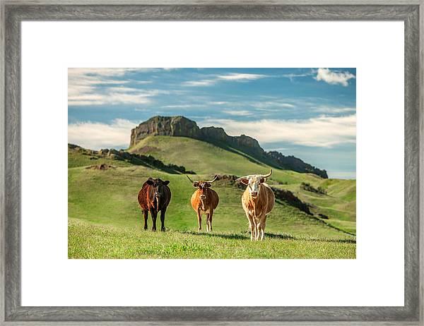 Western Longhorns Framed Print