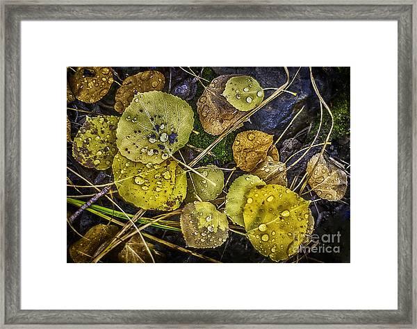 Wet Aspen Floor Framed Print