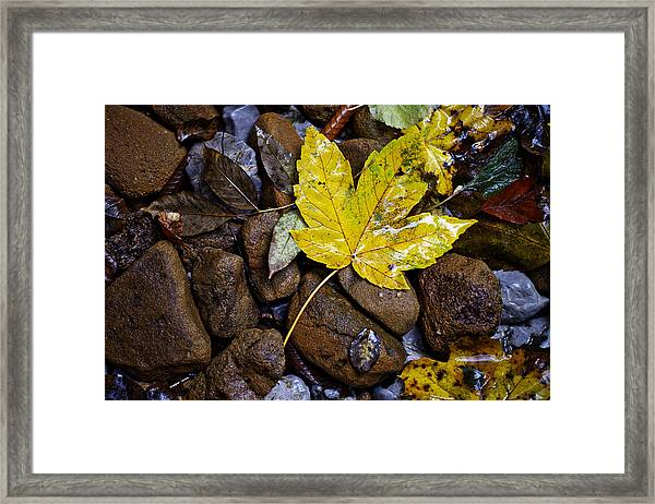 Wet Autumn Leaf On Stones Framed Print