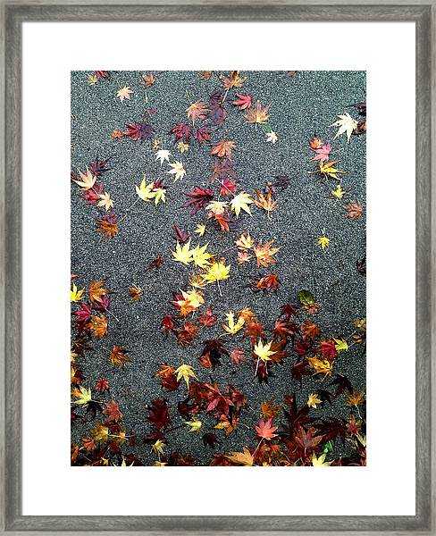 Wet Autumn Framed Print