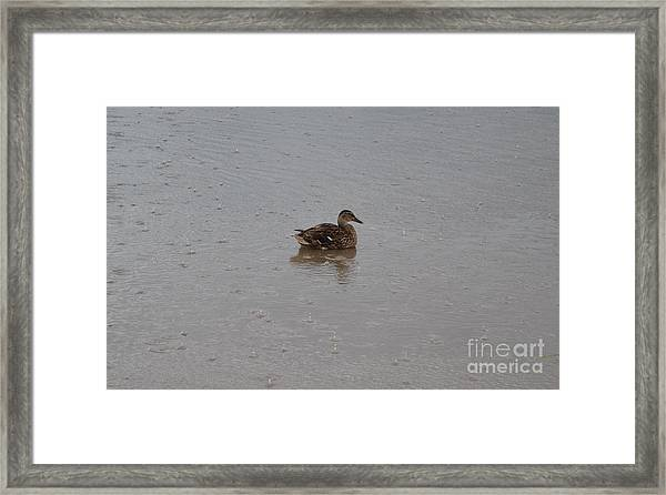 Framed Print featuring the photograph Wet Duck by Scott Lyons