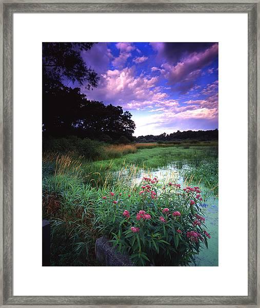 Wetland Wonder Framed Print