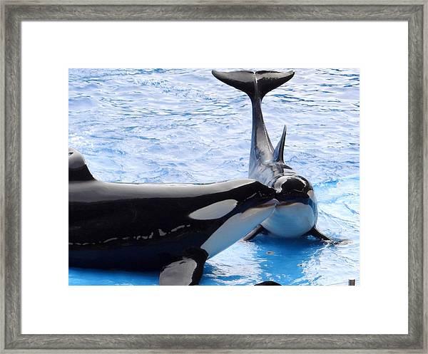 Whale Kiss Framed Print