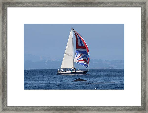 Whale Watching 2  Framed Print
