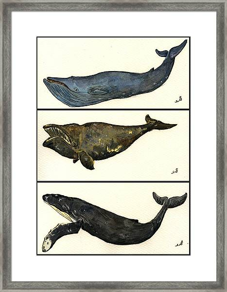 Whales Compilation 1 Framed Print by Juan  Bosco