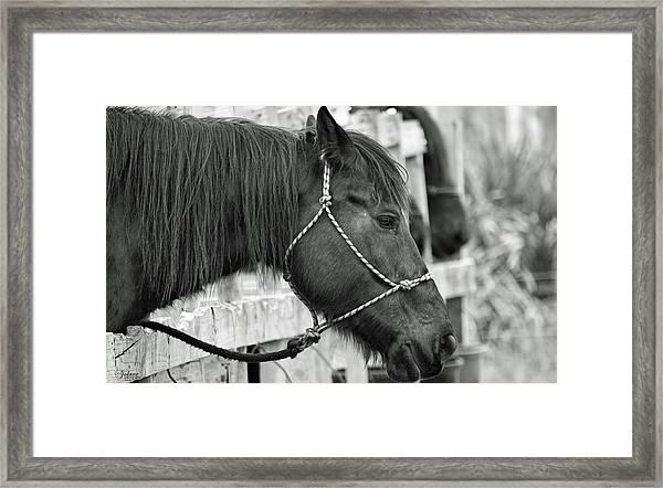 What A Horse Framed Print