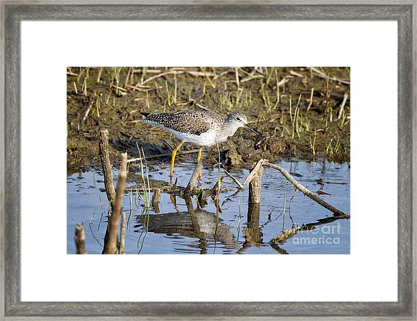 What A Meal Framed Print