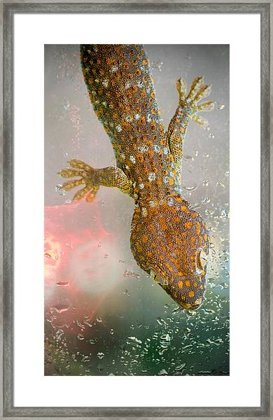 What If Tom Cruise Was A Gecko Framed Print