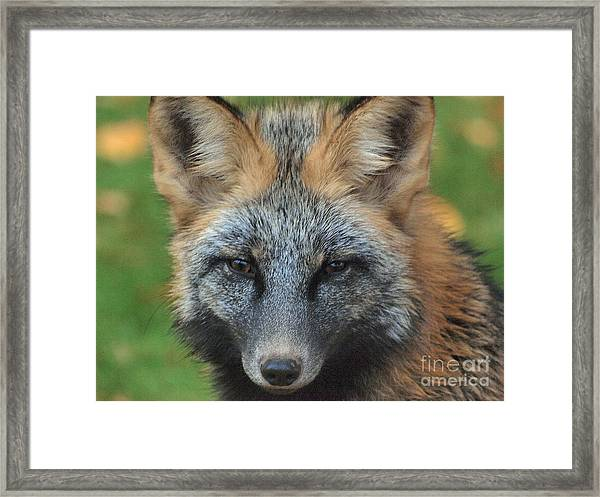 What The Fox Said Framed Print