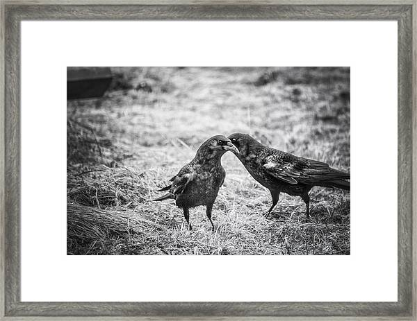 What The Raven Said Framed Print