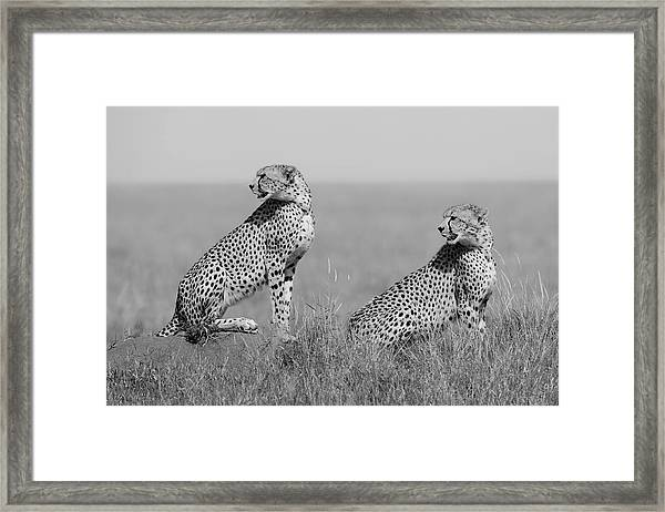 What's Going On Here Around? Framed Print