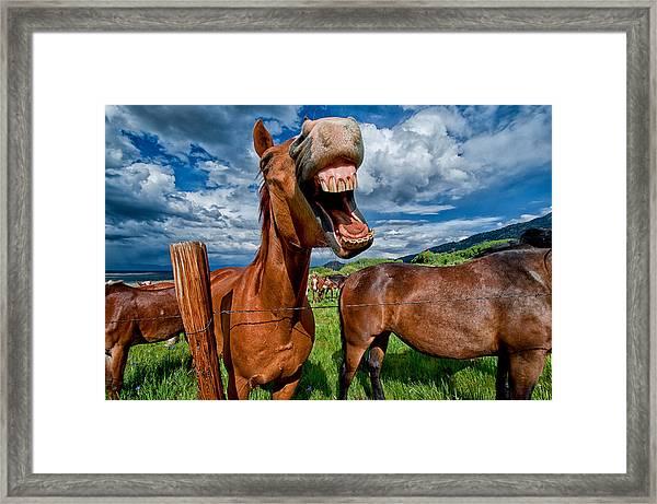 What's So Funny Framed Print