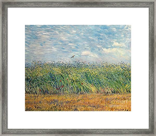 Wheatfield With Lark Framed Print
