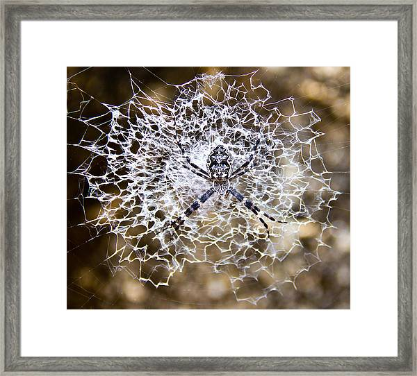 Wheel Weaving Spider Framed Print by Debbie Cundy