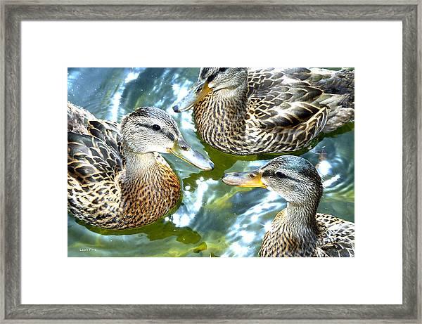 When Duck Bills Meet Framed Print