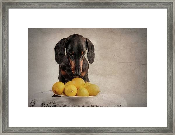 When Life Gives You Lemons... Framed Print by Heike Willers