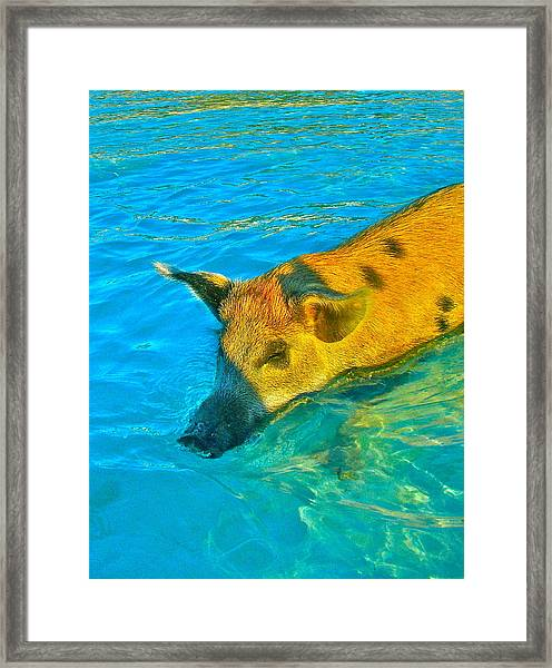 When Pigs Swim Framed Print