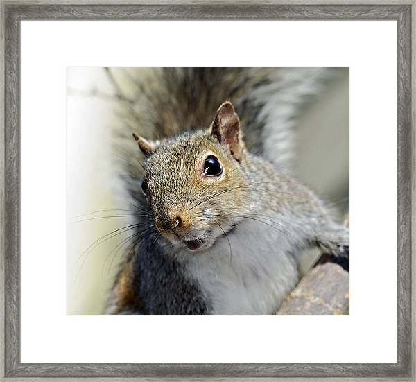 Where Are The Nuts Framed Print