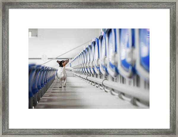 Where Is My Audience? Framed Print