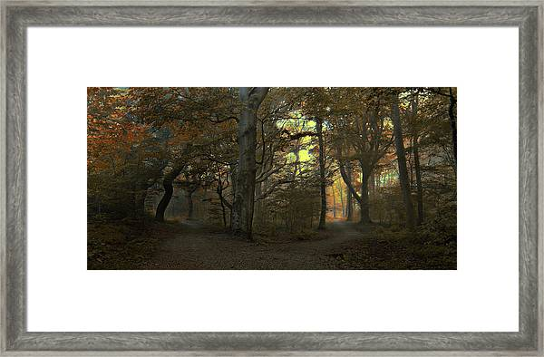 Which Path Framed Print