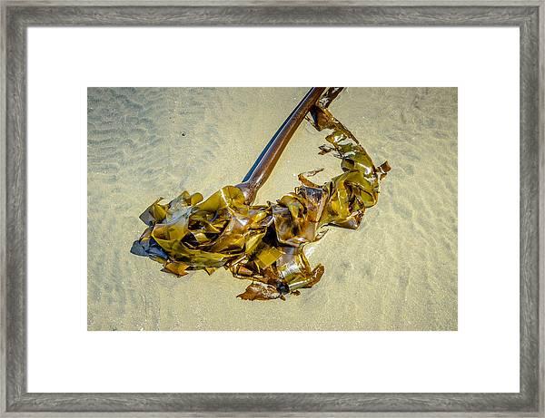 Whipped Up On Shore  Framed Print