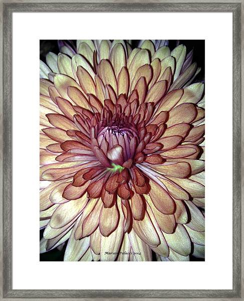 Whispering Bud Framed Print