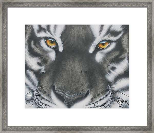 White And Black Tiger Framed Print