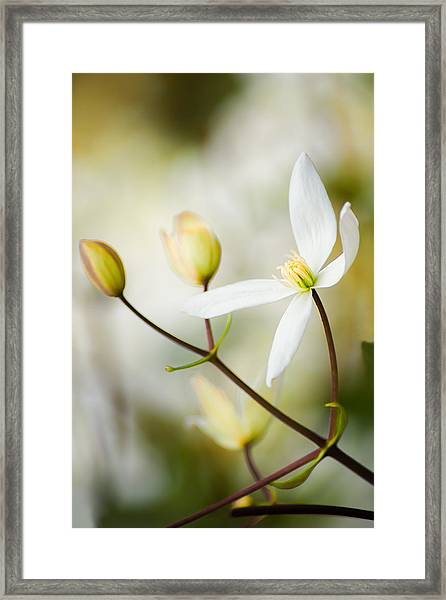 White Awake Framed Print