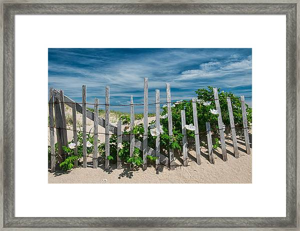 White Beach Roses Framed Print