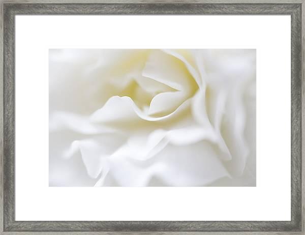 White Begonia Petals Framed Print