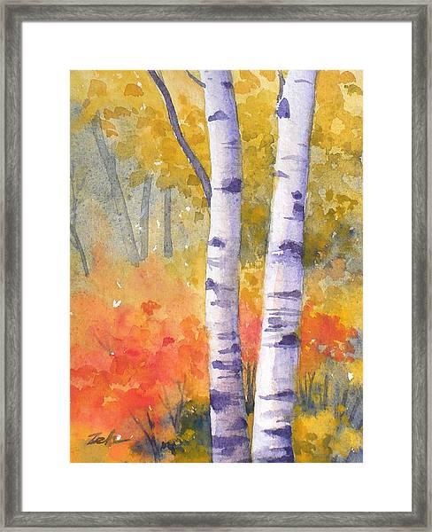 White Birches In Autumn Framed Print