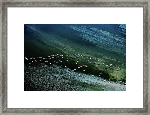 White Birds, Blue And Green Water Framed Print by Hao Jiang
