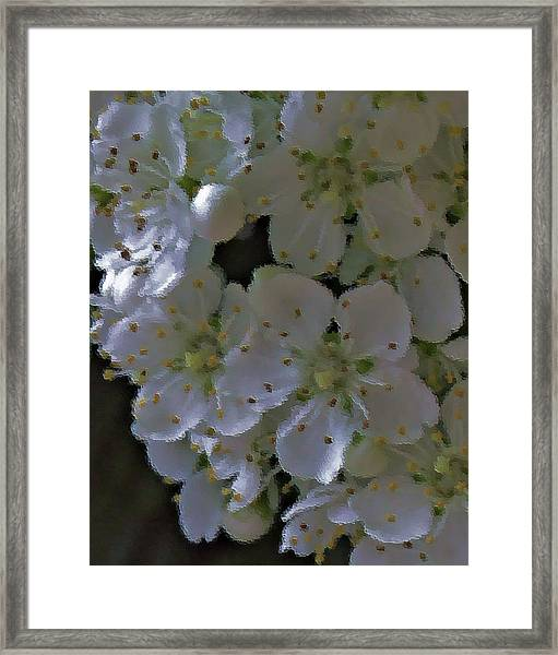 White Blooms Framed Print