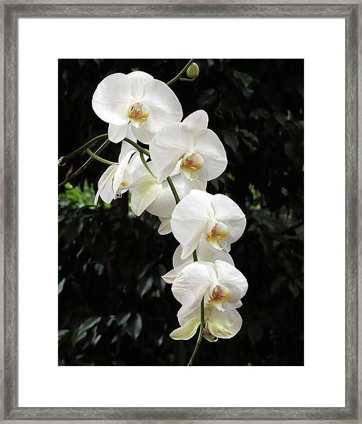 White Cascade Framed Print