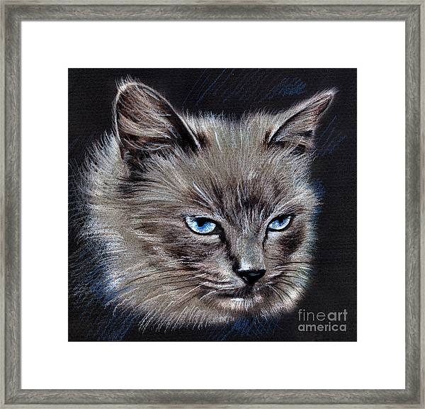 White Cat Portrait Framed Print